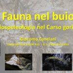 Fauna nel buio. La biospeleologia nel Carso goriziano