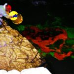Il 23 ottobre 2017 vengono immessi nelle acque del Fiume, cinque chilogrammi di fluoresceina, un tracciante atossico. Successivamente in diverse grotte vengono posizionate strumentazioni di rilevamento del tracciante, vengono fatte prove di portata, e, quotidianamente campionamenti diretti delle acque.