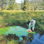 Colorazione al lago di Doberdò